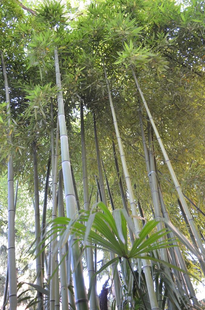 Canne di bambù giardini Via Fondazza