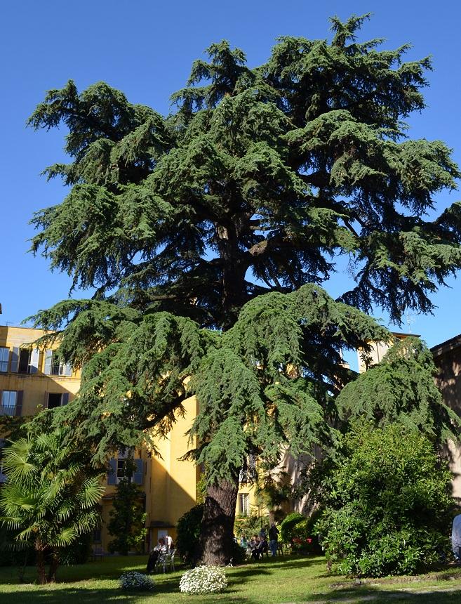 Giardini di Palazzo Rosselli del Turco
