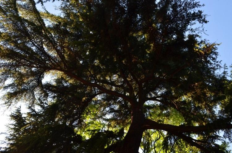 palazzo zani albero