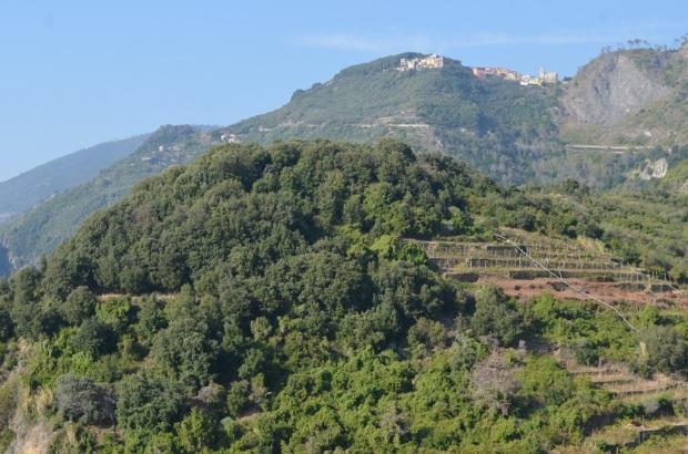 Terrazzamenti di Corniglia