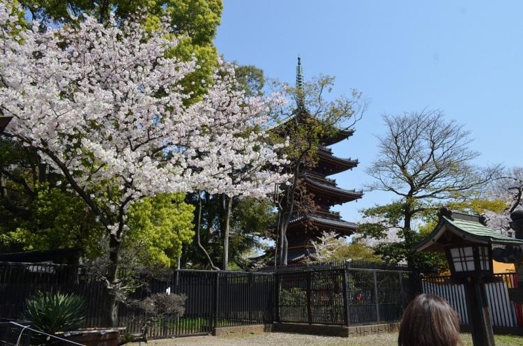 Pagoda Ueno Park Tokyo