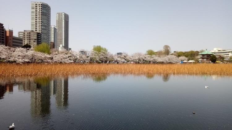 Stagno di Ueno - Tokyo