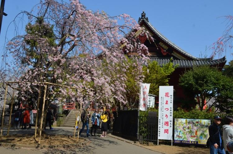 Tempio Kyomizu Kannon-do  - Tokyo