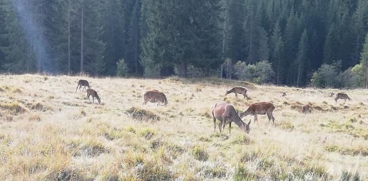 il recinto dei cervi - Parco Naturale Paneveggio