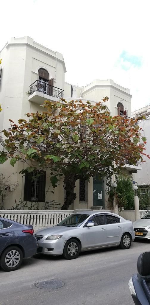 case in Rothschild Boulevard  Tel Aviv